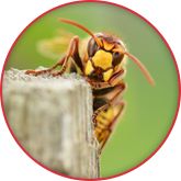 Lutte contre les insectes